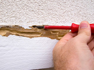 How To Tell If You Have A Termite Problem Utah Pest Control