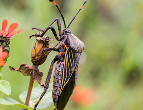 Bugs in Utah: 25 most common bugs and where to find them